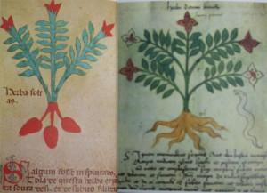 薬草―伝統的な知識と魔法能力が混同され、植物のことをよく知って いる村の女は魔女にされがちだった